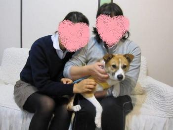 成犬オス No.1600 シュンタ→愉吉2.jpg