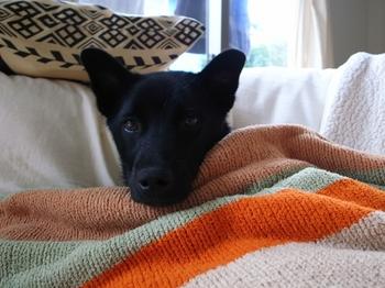 毛布をかけてもらって甘えん坊のニコくん.JPG