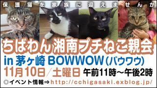 chigasaki_20121110_320x180.jpg